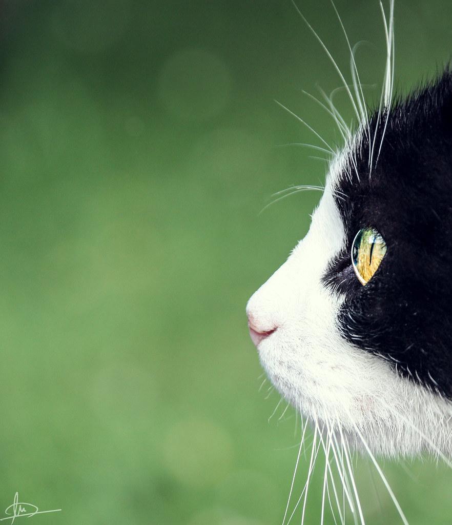 Begirada. Katua I Cat.