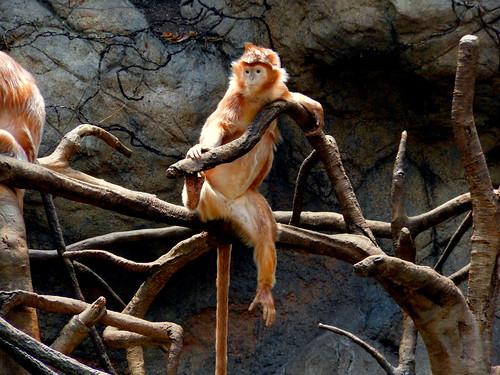 Currently - monkey-001