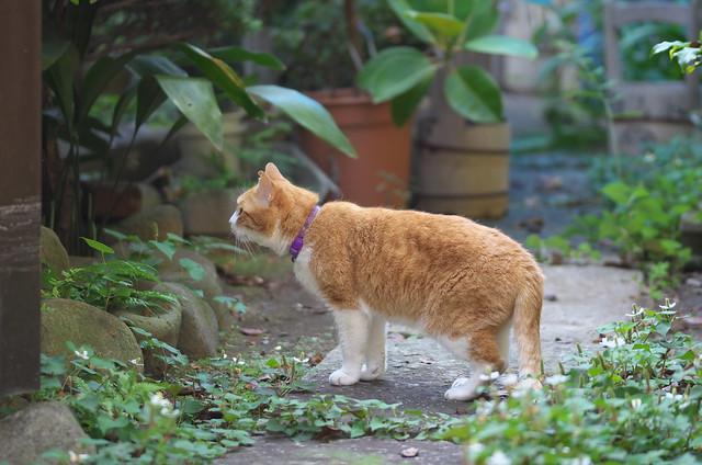 東京路地裏散歩 谷中のネコ 2014年6月15日