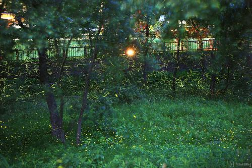 Firefly 2014 (Munakata)