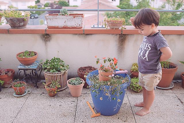 plantes vertes morganours planB