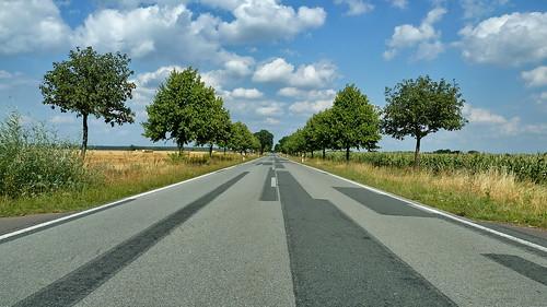 20130805 Strasse Allee Weg Magdeburg nach Tangermünde Elbe Radweg (87)