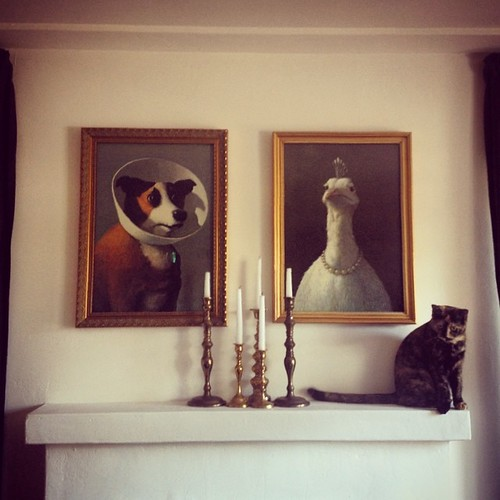 In good company. #catsofinstagram