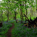 Park Wood, Appledore