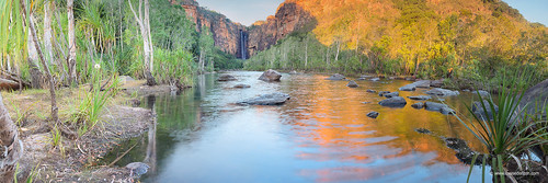 The King of Kakadu