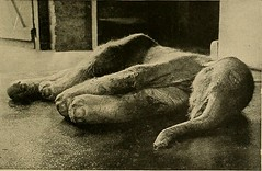 """Image from page 208 of """"Animal Life and the World of Nature; A magazine of Natural History"""" (1902)"""