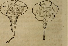 """Image from page 63 of """"The botanical class-book, and flora of Pennsylvania, designed for seminaries of learning and private classes"""" (1852)"""