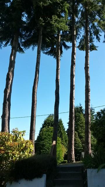 Meet our trees: Simon, Nick, Roger, Andy, and John
