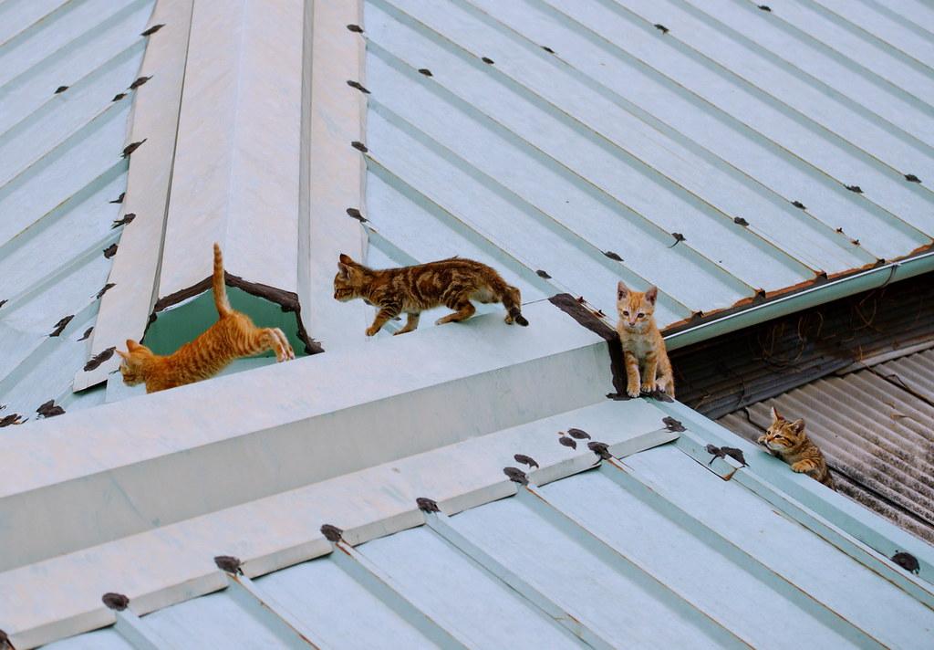 【攝影者專訪】拍街貓,只是想呈現另一個自己/Barrier33