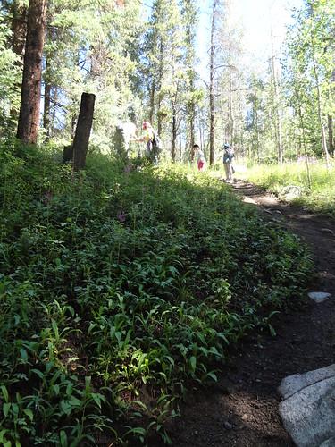 Elysium trail looking for Sierra