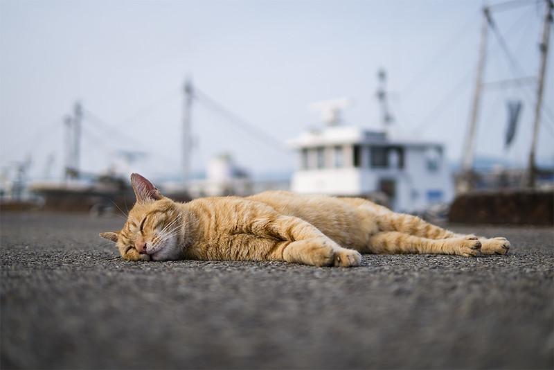 Cat Memories 2014/07/23