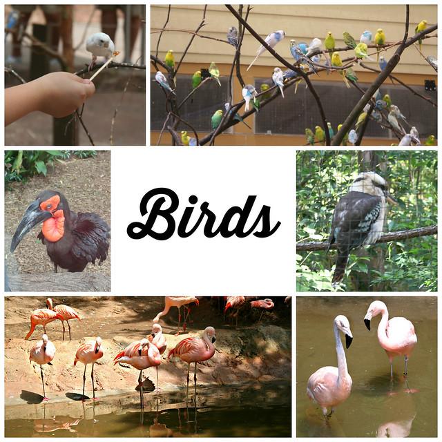Birds at Zoo Atlanta