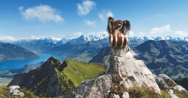 Švýcarsko na sociálních sítí.