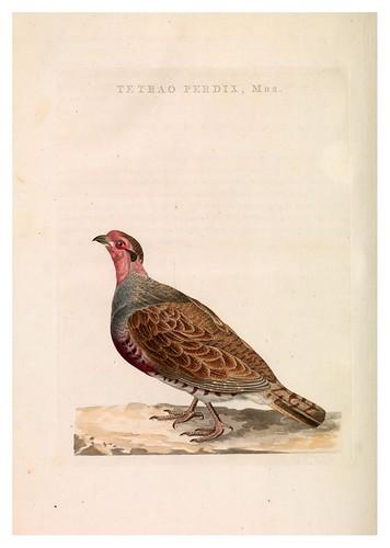 016-Perdiz- Nederlandsche vogelen- Nationale bibliotheek van Nederland