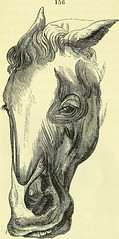 """Image from page 227 of """"On the anatomy of vertebrates [electronic resource]"""" (1866)"""