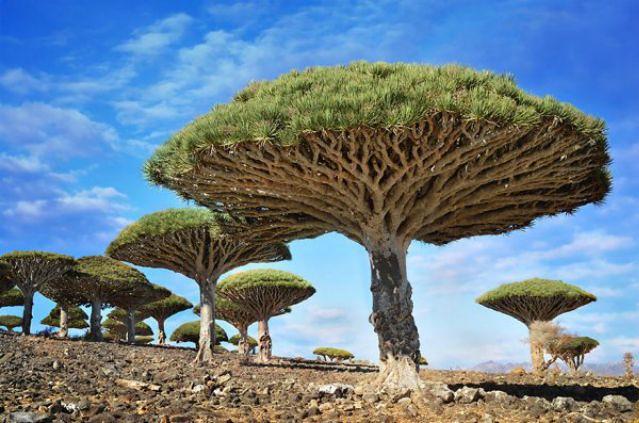 1_amazing-trees-11.jpg