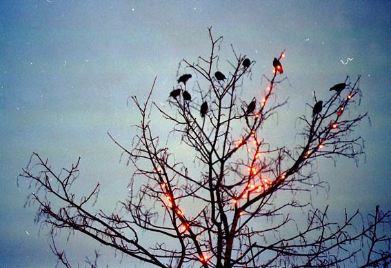 asketoner - the christmas birds