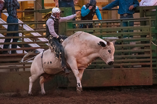 Rodeo -8382