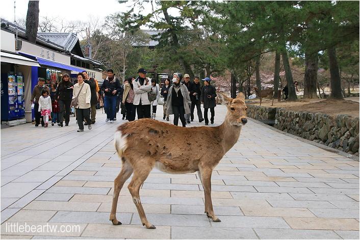 奈良公園-37