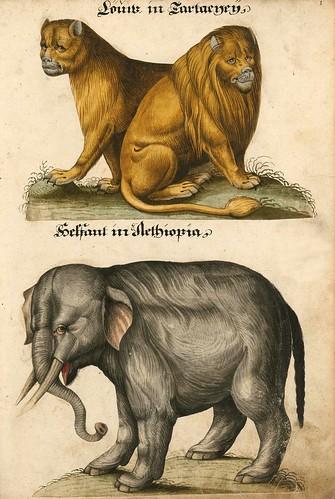 001-Aquarelle von Säugetieren…- e-manuscripta-Bibliothèque électronique suisse