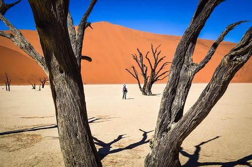 Paysage surréaliste de Dead Vlei, Namibie