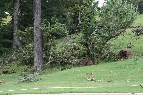 Tree Debris / P2013-0814D039