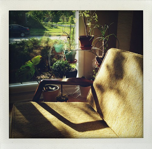 new sofa - sunshine - late afternoon