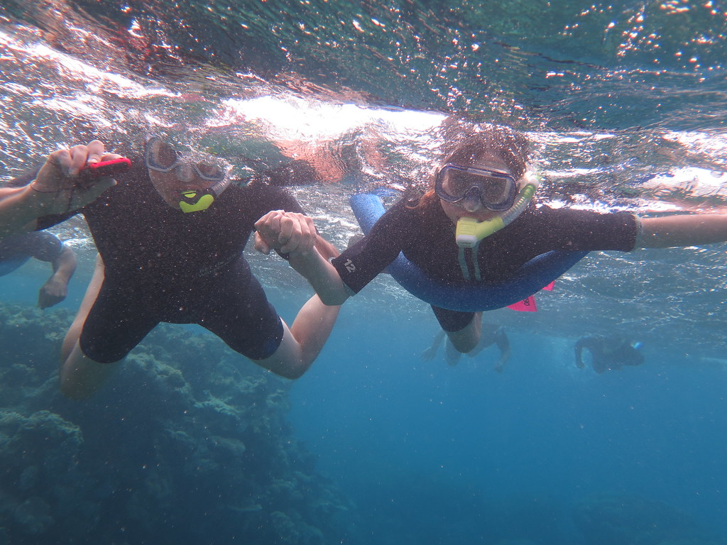 great barrier reef, opal reef, wavelength tours, port douglas, low isles, opal reef, snorkelling