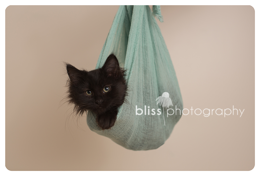 newborn kitten bliss photography-39005
