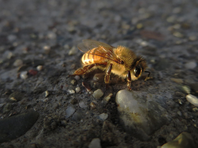 ill bee (2014)