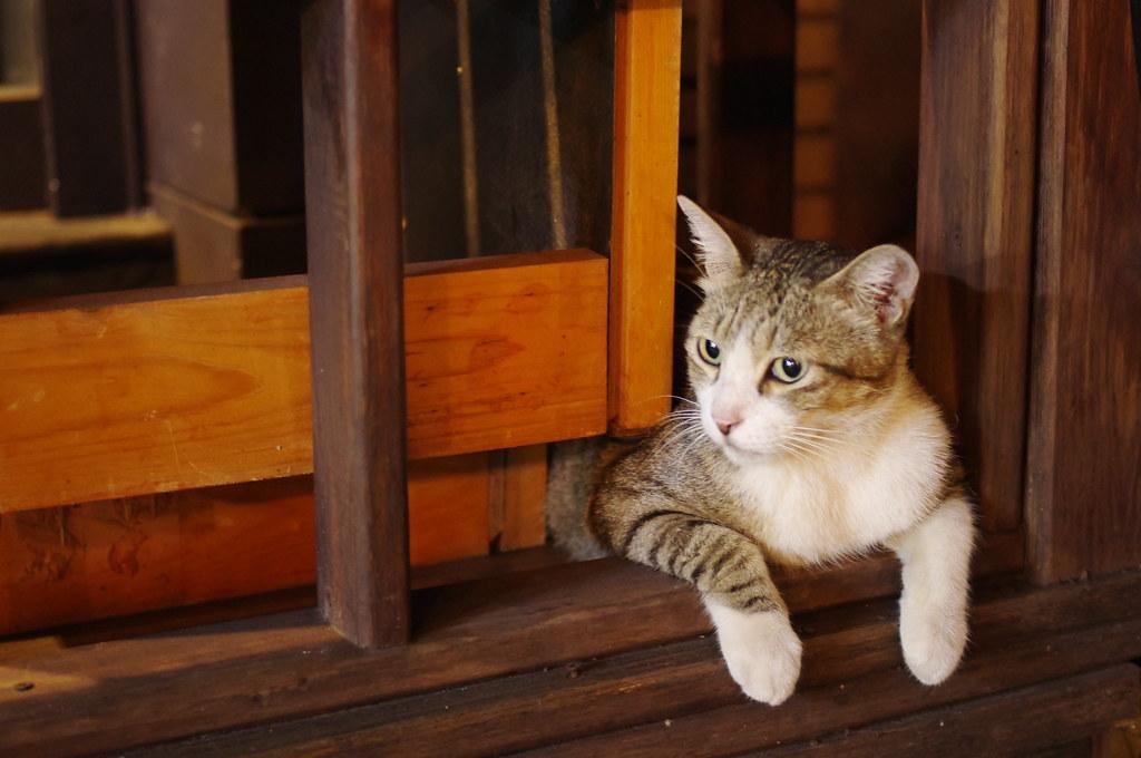 貓貓一張流