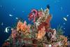 Liberty wreck reefscape