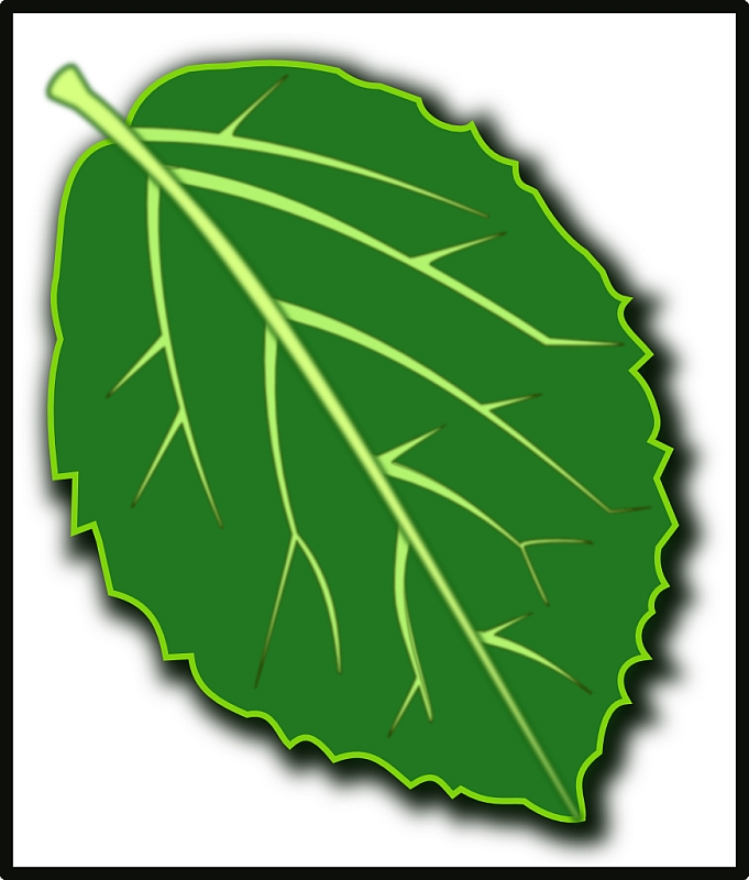 Viburnum Leaf Icon