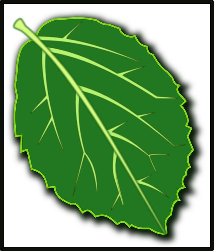 Viburnum Leaf Icon