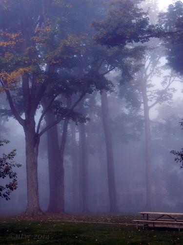 morning trees tree nature fog sunrise nikon foggy picnictable chautauqua chautauquainstitution week39 coolpixp500 nikonflickraward blinkagain 522014 52of2014