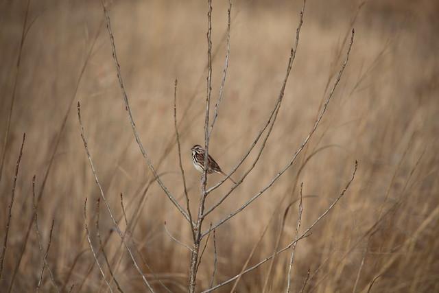 Jelke Creek Bird Sanctuary