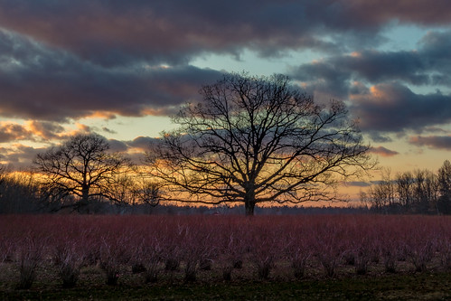 canoneos5dmarkiv tree dogwood redtwig sunset atardecer midmichigan sanford michigan farm shapely field campo clouds february
