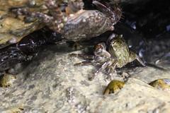 The crabhouse