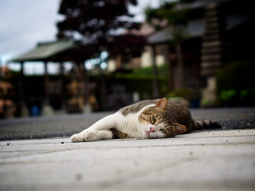 cat of the temple