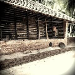 Barn in Disuse