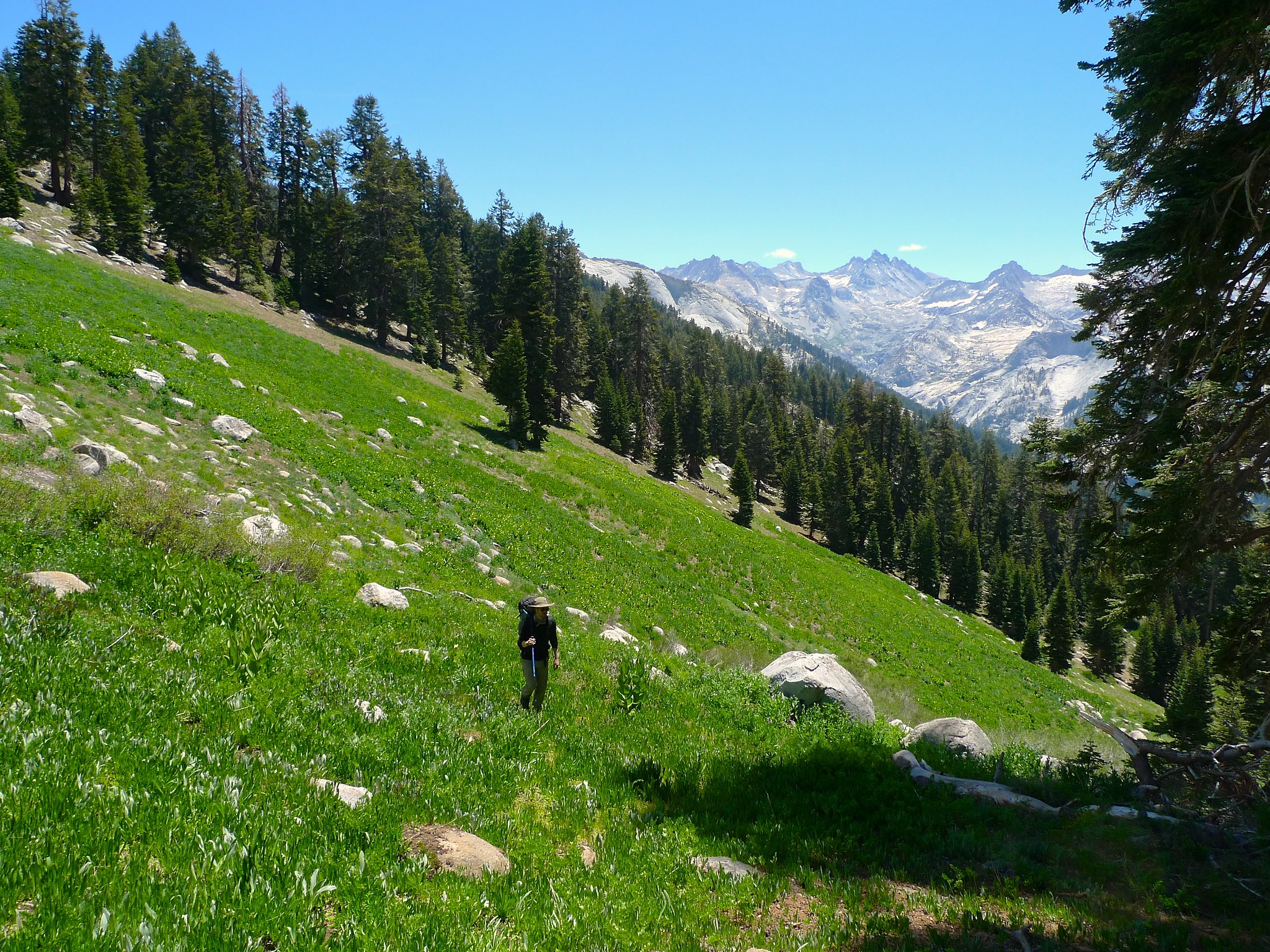 Cross-country nearing Alta Meadow