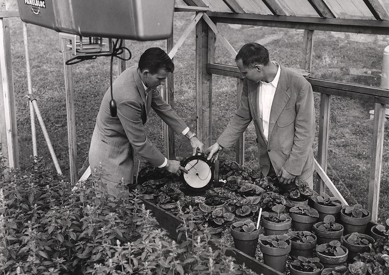 Men in greenhouse with plants