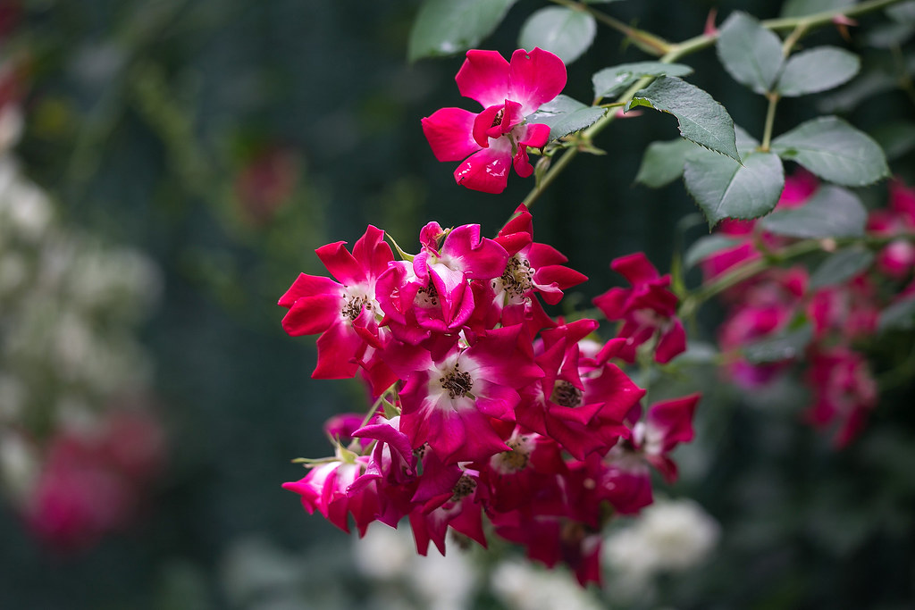 ►►► My Secret Garden 我的秘密花園 [5] ● DV ◄◄◄