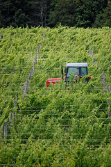 Vineyard Tractor Cruise