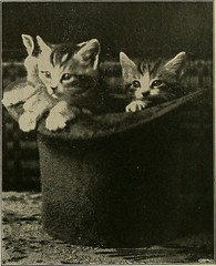 "Image from page 113 of ""Our domestic animals, their habits, intelligence and usefulness;"" (1907)"