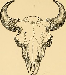 "Image from page 245 of ""Horn measurements and weights of the great game of the world: being a record for the use of sportsmen and naturalists"" (1892)"