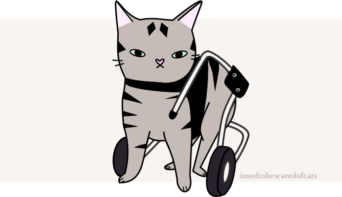 Dot the cat with Spina Bifida