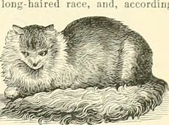 "Image from page 204 of ""Hill's album of biography and art : containing portraits and pen-sketches of many persons who have been and are prominent as religionists, military heroes, inventors, financiers, scientists, explorers, writers, physicians, actors,"