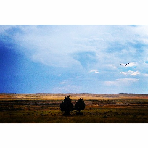 Wyoming continues to please the eyes. Bird of prey in flight. #mothernature #cloudporn #greatamericantowhere @natgeo
