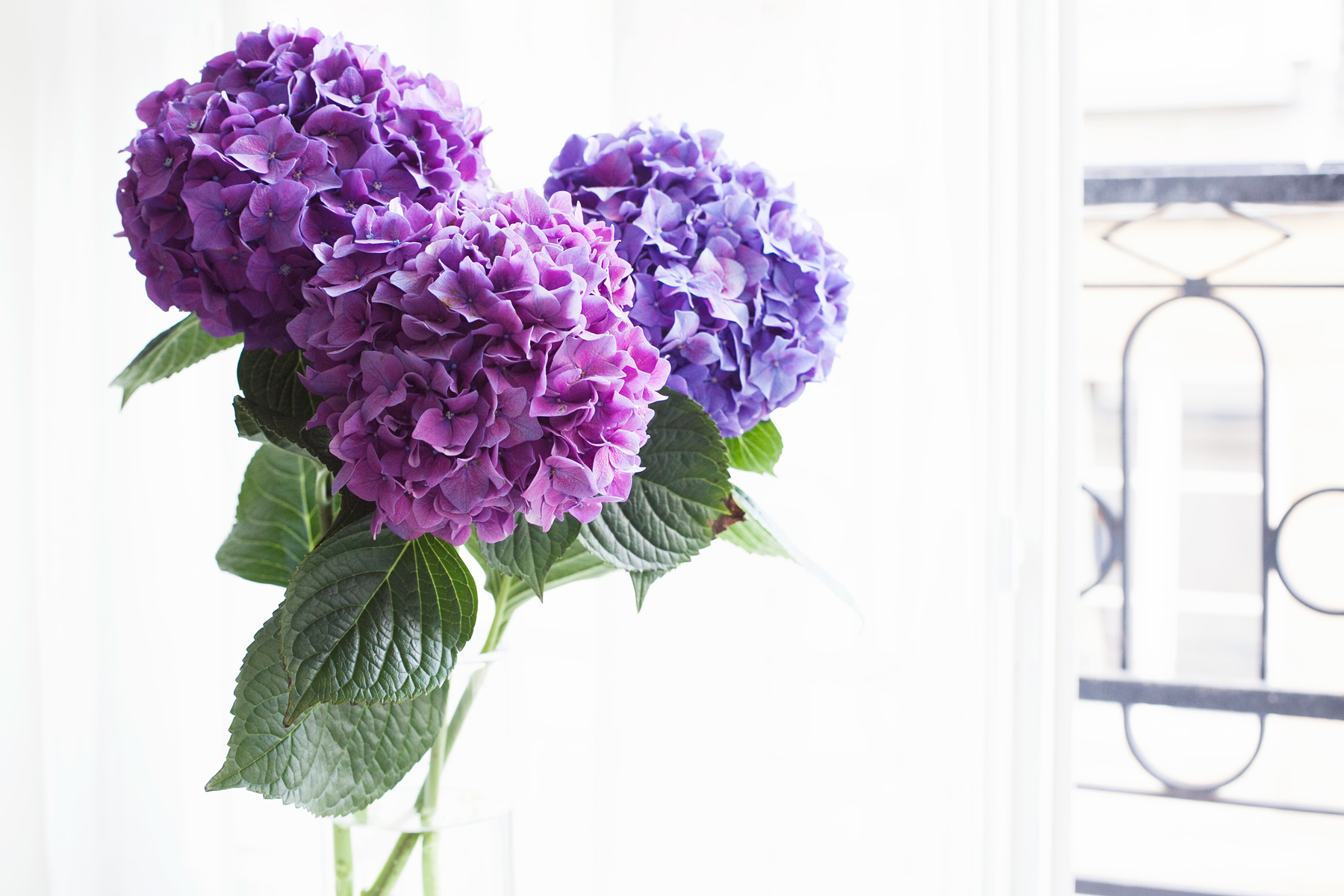 Hydrangeas by Carin Olsson (Paris in Four Months)